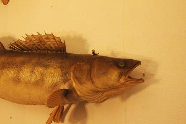 Fischpräparat + handbemalte Figur/ Fish prepared + handpainted Figur